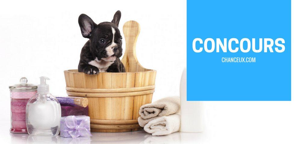 Concours gagner 1 an de toilettage pour votre chien grâce à Planète Hollywouf